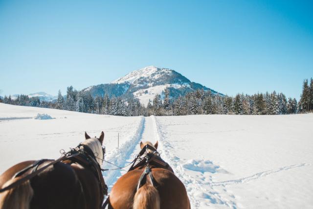 vervoer koets sneeuw